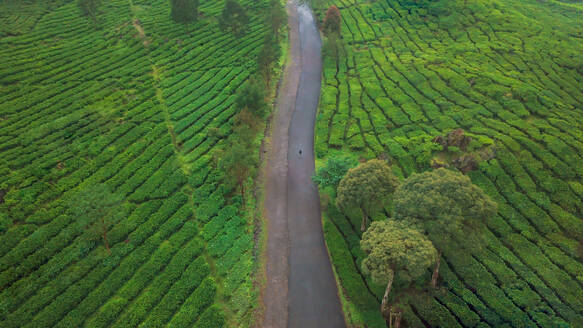Aerial view of a man walking on a road through the Rancabali tea plantations in west Java island of Indonesia - AAEF00328
