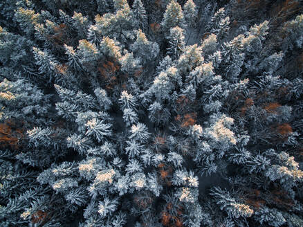 Aerial view of snowy forest during winter in Estonia. - AAEF00886