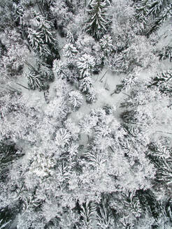 Aerial view of snowy forest in Estonia. - AAEF00895