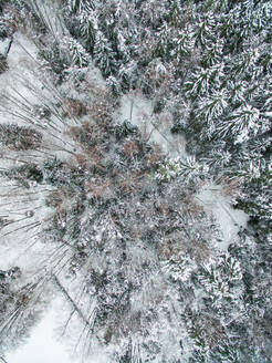 Aerial view of snowy forest in Estonia - AAEF00898