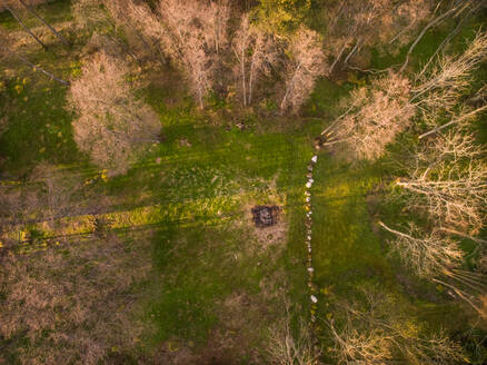 Aerial view of a wood at sunset in Estonia. - AAEF00904