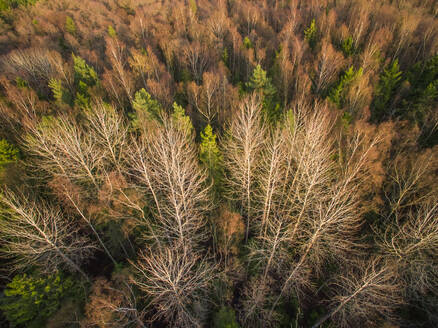 Aerial view of a forest during fall season in Estonia. - AAEF00907