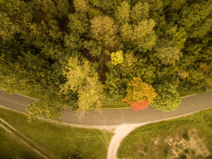Aerial view of a forest on road side in countryside in Estonia. - AAEF00940