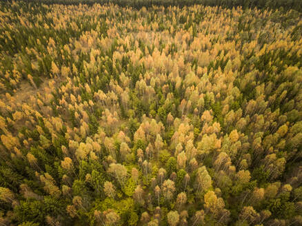 Aerial view of colorful forest in Estonia. - AAEF00943