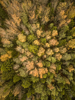 Aerial view of colorful forest in Estonia - AAEF01024