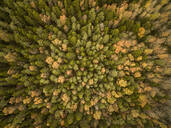 Aerial view of colorful forest in Estonia - AAEF01027
