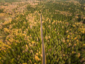 Aerial view of a straight road crossing a colorful forest in Estonia - AAEF01036