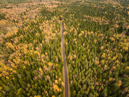 Aerial view of a straight road crossing a colorful forest in Estonia. - AAEF01036