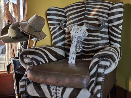 Remains of a wildebeest cranium on a zebra sofa. Mpumalanga, South Africa. - VEG00443