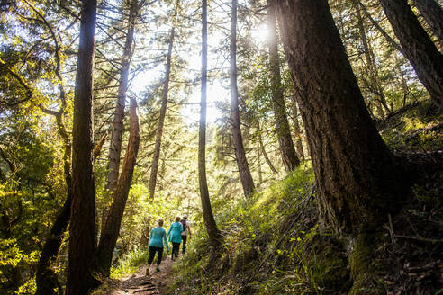 Women hiking in sunny forest - BLEF13771