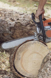 Man jointing a tree trunk with a motor saw - MMAF01091