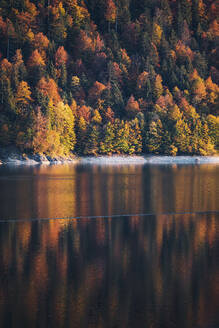 Sylvenstein lake against coniferous trees in forest during autumn in Upper Bavaria, Germany - MMAF01103