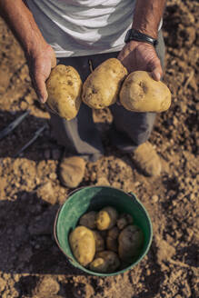 Close up of farmer holding potatoes in sunny in a field, Lleida - ACPF00584
