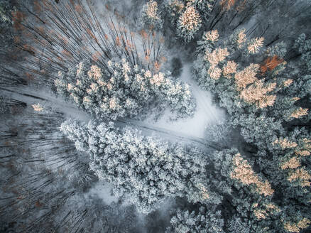 Aerial view of snowy road in the forest in Estonia. - AAEF02118