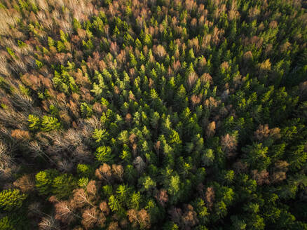 Aerial view of a forest during fall season in Estonia. - AAEF02145
