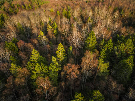 Aerial view of a forest during fall season in Estonia. - AAEF02148