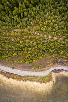 Aerial view of an empty road surrounded by nordic forest and coast of Island Vormsi, Estonia. - AAEF02211