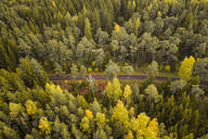 Aerial view of an empty road crossing the nordic colorful forest at fall in Estonia - AAEF02226