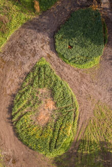 Abstract aerial view of grass round on the ground in countryside. - AAEF02229