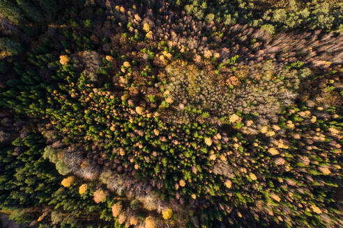 Aerial view of colorful forest in Marimetsa natural reserve in Estonia. - AAEF02232