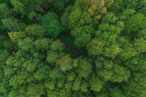 Aerial view of dirty road crossing forest in Forby on Vormsi island, Estonia - AAEF02660