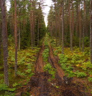 Aerial view of dirty road going through forest in Forby on Vormsi island, Estonia - AAEF02666