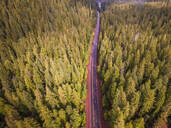 Aerial view of a road crossing the forest in Oregon, USA - AAEF03040