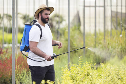 Young man spraying herbicide on plants in the greenhouse - JSRF00526