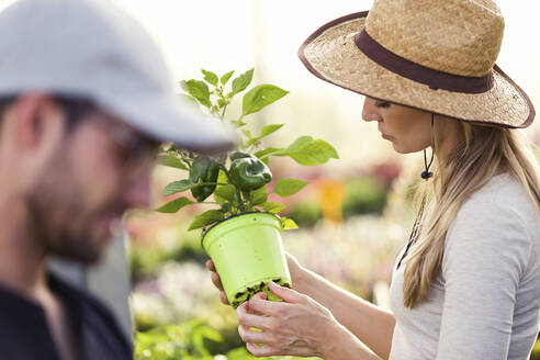 Beautiful young woman taking care of plant in the greenhouse - JSRF00550