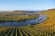 Vineyards near Trittenheim, Moselle Valley, Rhineland-Palatinate, Germany, Europe - RHPLF01273