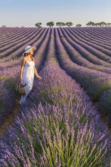 Woman with hat in lavender fields, Plateau de Valensole, Alpes-de-Haute-Provence, Provence-Alpes-Cote d'Azur, France, Europe - RHPLF01492