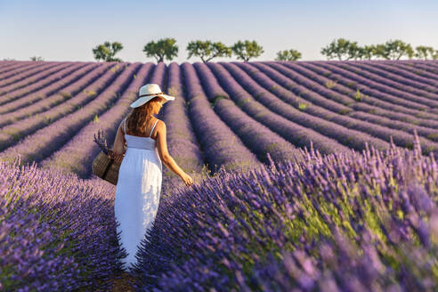Woman with hat in lavender fields, Plateau de Valensole, Alpes-de-Haute-Provence, Provence-Alpes-Cote d'Azur, France, Europe - RHPLF01495