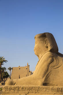 Avenue of Sphinxes, Luxor Temple, UNESCO World Heritage Site, Luxor, Egypt, North Africa, Africa - RHPLF02042