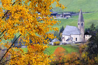 Tree with yellow leaves with the church of Santa Magdalena in the background, Funes Valley, Sudtirol (South Tyrol), Dolomites, Italy, Europe - RHPLF03167