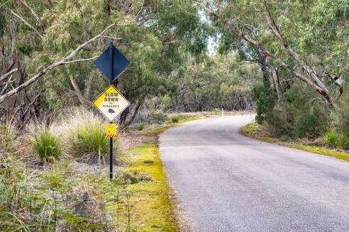 Bandicoots crossing sign by road amidst trees, Victoria, Australia - SMAF01323