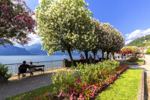 Blooms on the lake side of Bellagio, Province of Como, Lake Como, Italian Lakes, Lombardy, Italy, Europe - RHPLF03567