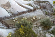 High angle view of sheep resting in pen at Göreme city, Cappadocia - KNTF03108