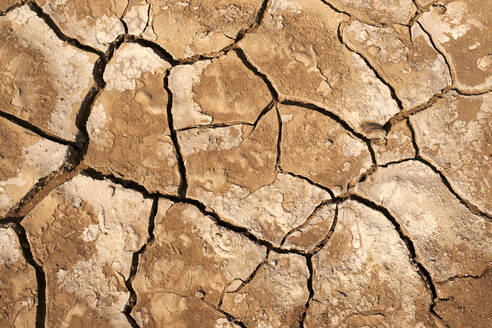Cracked dry ground, Namib Province, Angola. - VEGF00563