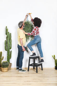 Couple hanging plant on the wall at home - RTBF01339