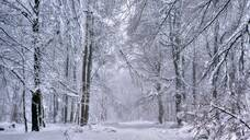 Forest in winter, Erbeskopf Mountain, 816m, Saar-Hunsrueck Nature Park, Rhineland-Palatinate, Germany, Europe - RHPLF04544