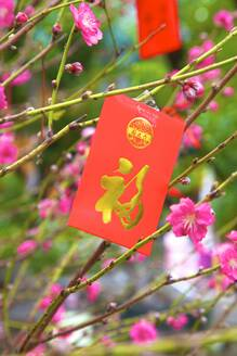 Cherry blossom trees with Lai See Red Envelopes for Chinese New Year, Hong Kong, China, Asia - RHPLF05333