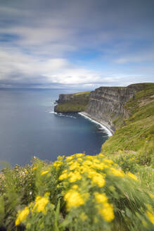 Wild flowers on steep reefs of Cliffs of Moher, The Burren, County Clare, Munster, Republic of Ireland, Europe - RHPLF05531