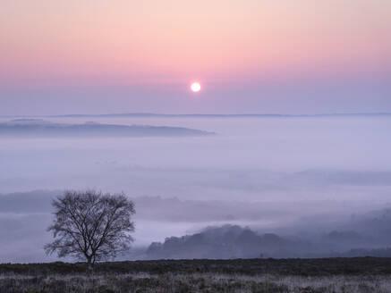 A soft and misty sunrise over Yarner Wood, Dartmoor National Park, Bovey Tracey, Devon, England, United Kingdom, Europe - RHPLF06383