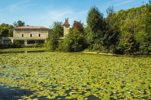 Lily pads on Le Dropt River at this popular south western historic bastide town, Eymet, Bergerac, Dordogne, France, Europe - RHPLF06690
