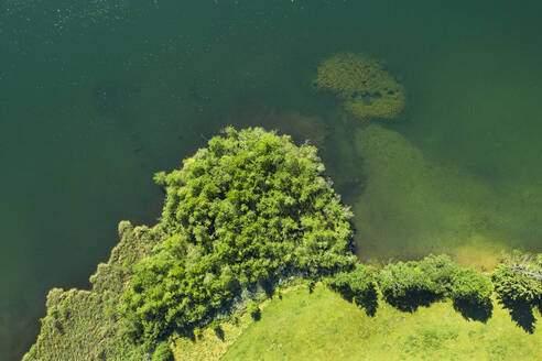 Drone shot of trees at Riegsee lakeshore in Bavaria, Germany - LHF00676