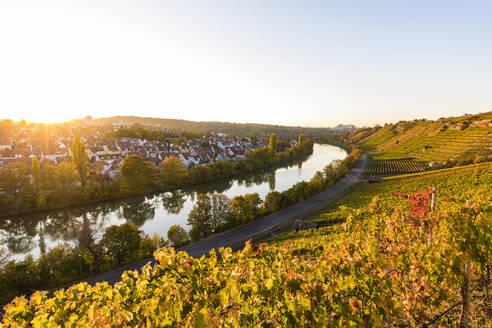 Deutschland, Baden-Württemberg, Stuttgart, Blick auf Stuttgart-Münster, Neckar, Weinberge, Terrassenweinbau, Steillage, Steillagenbau, Herbst, Weinbau - WDF05469