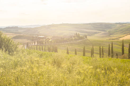 Farmhouse and cypresses, Val d'Orcia (Orcia Valley), UNESCO World Heritage Site, Tuscany, Italy, Europe - RHPLF07589