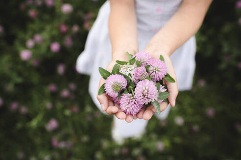 Girl's hands with clover flowers - EYAF00387