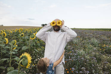 Playful man covering his eyes with sunflowers in a field with daughter embracing him - KMKF01059