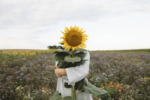 Sunflower covering face of a boy in a field - KMKF01065